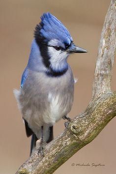 pretty blue bird