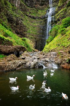 Aveiro waterfall, Maia. Santa Maria, Azores islands, Portugal