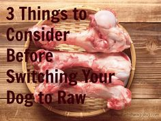 Transition dogs to raw food