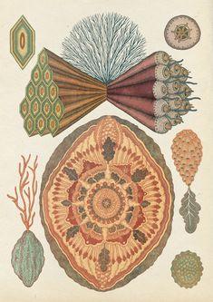 The Scientific and Anatomical Illustrations of Katie Scott: katie_scott_10_20111219_1530819508.jpg