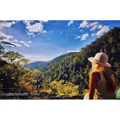 Breathe in the nature and feel fresh again at Kondalilla National Park #thisisqueensland by @lightcapturer_com