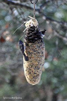 I've made winter bird-feeders by covering the pinecones from the White Pines of my property with suet for years. It makes a cheap - natura...