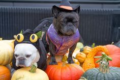 At the farm, Francesca and Sharkey show off their #MarthaStewartPets #Halloween costumes from #PetSmart