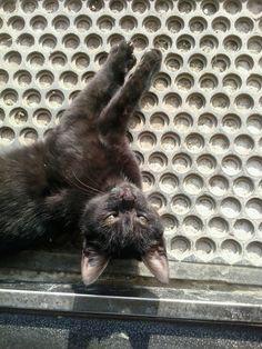 #lovemycat #blackcat #upsidedown