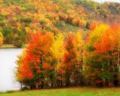 Image result for fall scenery