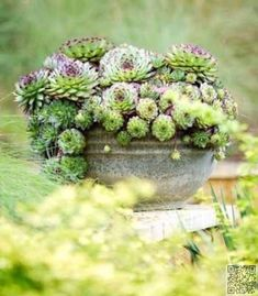 39. #Single Type - 43 Outstanding #Succulent Gardens You Can Create at Home ... → #Gardening #Gardens