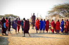 Cultura y tradición en Tanzania. Los masai mara nos dan la bienvenida a su poblado con sus bailes y cantos a la vuelta de nuestro safari...
