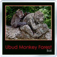 $3.29 - Acrylic Fridge Magnet: Indonesia. Bali. Monkey Forest. Ubud