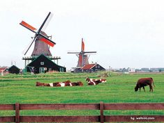 Holland Scenery   index first prev page 1 travel in holland netherlands scenery 295196 ...