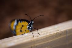Papilonia Butterfly House