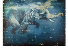 Elephant Underwater | Gifts for Animal Lovers | Gifts | Z Gallerie