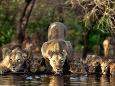 Darling babies stop for a drink