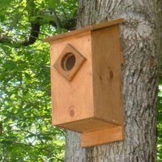 Screech Owl Nest Box