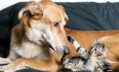 Household Pollutants and Pets