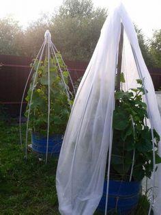 Organic Gardening – Organic Gardening Tips