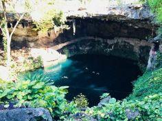 Cenote Zaci in Valladolid, Mexico Aquarium, Mexico, River, World, Outdoor, Goldfish Bowl, Outdoors, Aquarium Fish Tank, The World