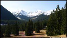 krokusy-w-Dolinie-Chocholowskiej- #Tatry #Dolina#Chochołowska #krokusy #Polana Chochołowska #góry #Mountains #Poland #Polska #Zakopane