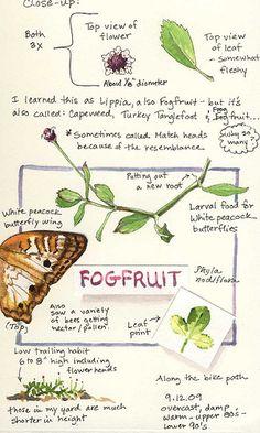 A Nature Art Journal in Southwest Florida: Keeping a nature art sketchbook