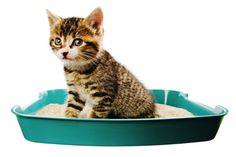 Covered or Uncovered Litter Boxes: Do Cats Really Care?