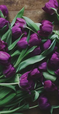 A photo of massed purple tulips for my wall gallery! [Louise Ljungberg]