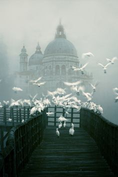 The fog and mist in #Venice make for some magical photos like this one of the Santa Maria della Salute from Zú Sánchez