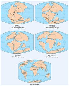 Pangea Pangaea Continent Maps Illustrations Transformation Of Continents Plate Tectonics Continental Drift Permian Triassic Jurassic Cretaceous Present Earth Science, Science And Nature, Morocco Map, Tectonique Des Plaques, Plate Tectonics, Old Maps, Historical Maps, World History, Evolution