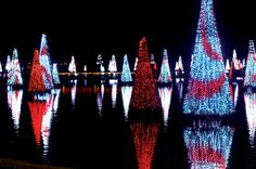 Christmas at SeaWorld!  One of my very favorite places!