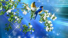 ~*~ Couple Birds ~*~ - Other Wallpaper ID 1588115 - Desktop Nexus Nature