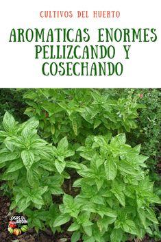 Container Herb Garden, Indoor Garden, Vegetable Garden, Garden Plants, Gardening Zones, Gardening Tips, Growing Plants, Growing Vegetables, Garden Online