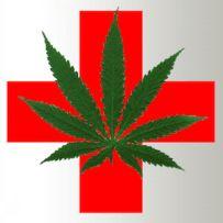 Medicinal Cannabis Studies