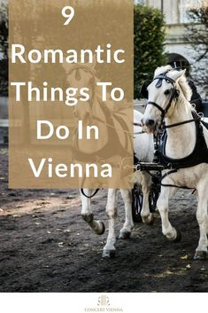 Planning to travel to Vienna with that special someone? Visit the #ConcertVienna blog to discover 9 of the most romantic things to do in Vienna! #Vienna #Austria #Honeymoon #Travel #TravelTips #Traveling #TravelGuide #Wanderlust #Europe