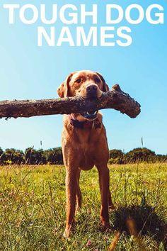 Tough Dog Names – Scary, Fierce, Strong, Guard Dog Inspired Ideas Tough Dog Names, Female Dog Names, Scary Names, Cute Labrador Puppies, Guard Dog, Puppy Names, Dog Quotes, Mom And Dad, Dog Love