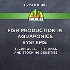 Episode 12: Fish Production in Aquaponics Systems