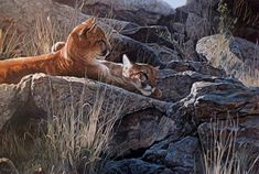 """""""Afternoon Light Young Cougars"""" by Terry Isaac"""