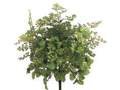 """16"""" Tall Maidenhair Fern Bush in Light Green Allstate Floral & Craft http://www.amazon.com/dp/B01AAWW29Y/ref=cm_sw_r_pi_dp_.Y.Wwb1E8V306"""