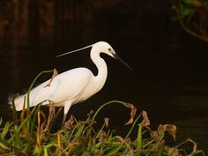 Coringa Wildlife Sanctuary - in Andhra Pradesh, India