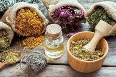 Combinações de ervas medicinais para chás! - Saúde Melhor