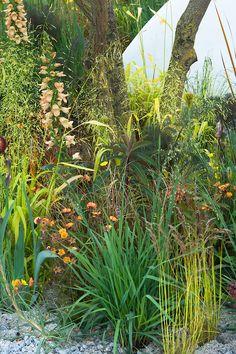 Pure Land Foundation Garden designed by Fernando Gonzalez, RHS Chelsea Flower Show 2015. Plants include: Digitalis 'Illumination Apricot', Geum 'Fire Storm', Geum 'Lady Stratheden', Briza media 'Limouzi'.