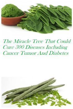 The Miracle Tree That Could Cure 300 Diseases Including Cancer Tumor And Diabetes