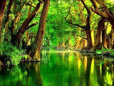"The World Greatest Thing: A Michoacan Treasure : ""Lake Camecuaro"" 3d Nature Wallpaper, Forest Wallpaper, Beautiful Nature Wallpaper, Beautiful Landscapes, Hd Wallpaper, Goa India, Green River, River Bank, Green Nature"
