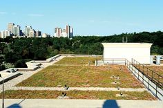 Dispelling the myth of the maintenance-free vegetated roof Green Roofs, Maturity, Plants, Free, Design, Plant, Planets