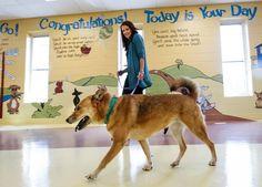 1000 Images About Carolina Dogs On Pinterest Dog