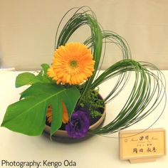Oct 5, 2013 Free Style for Torrance Ikenobo LA Chapter Exhibition Materials: Gerbera, Monstera, Steel Grass, Lisianthus, Caspia