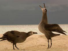 Seabird Photos -- National Geographic