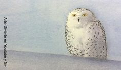 Cómo hacer una tarjeta navideña original - Acuarela de lechuza en la nieve #arte #pintura #ArteDivierte #lechuza #acuarela #postalnavideña #Navidad #nieve #tutorial #artistleonardo #LeonardoPereznieto  Haz clíck aquí para ver mi libro: http://www.artistleonardo.com/#!ebooks/cwpc