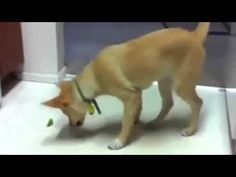 Dogs Eat and Playing Funny Style 2015