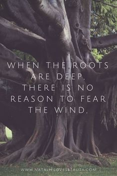 When the roots are deep, there is no reason to fear the wind
