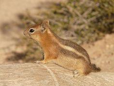 #animal #chipmunk #close up #furry #squirrel #wildlife