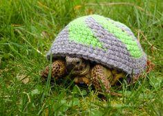 turtle cozy knitting pattern - Google Search