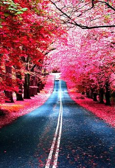 Pink...alley of trees